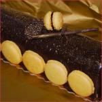 Bûche trois chocolats